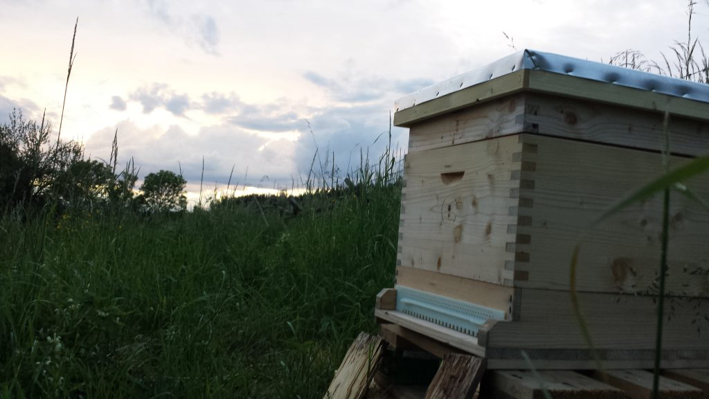 Bienenstock von Elisabeth, © Elisabeth Pfeifhofer