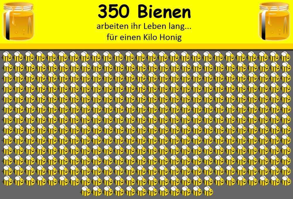 350 Bienen für 1 Kilo Honig