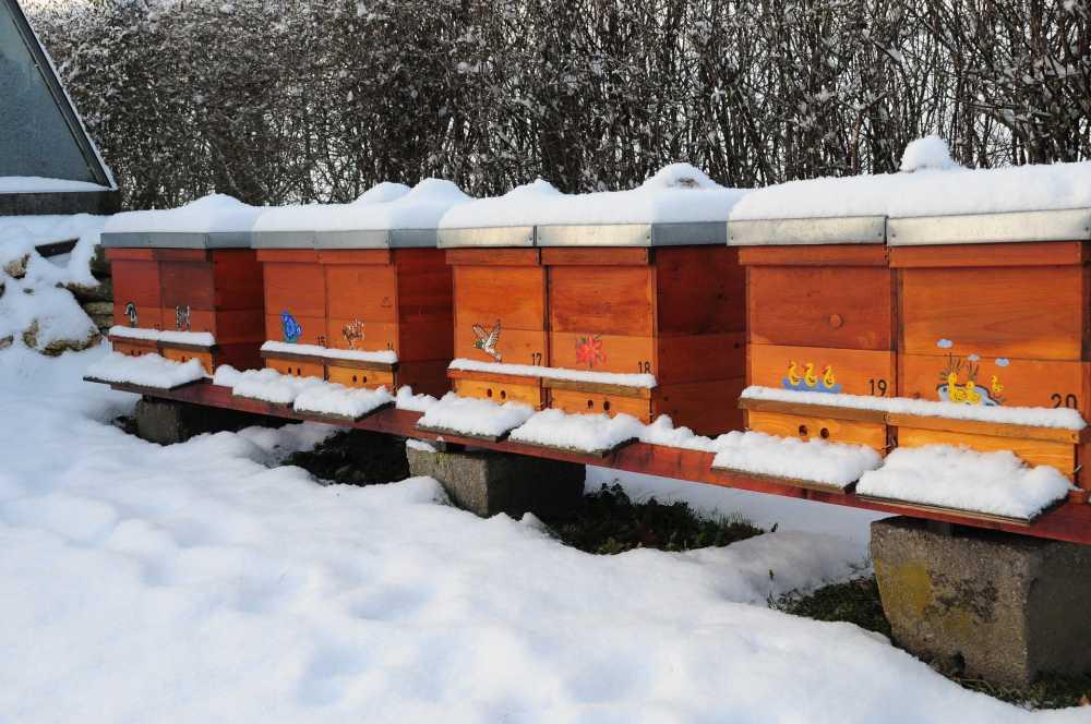 Bienen im Winter_pixabay, maria-anne