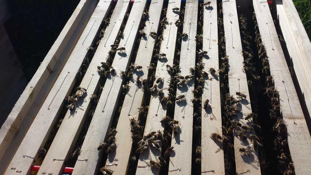 Bienenstock mit Rähmchen und Bienen, Elisabeth Pfeifhofer