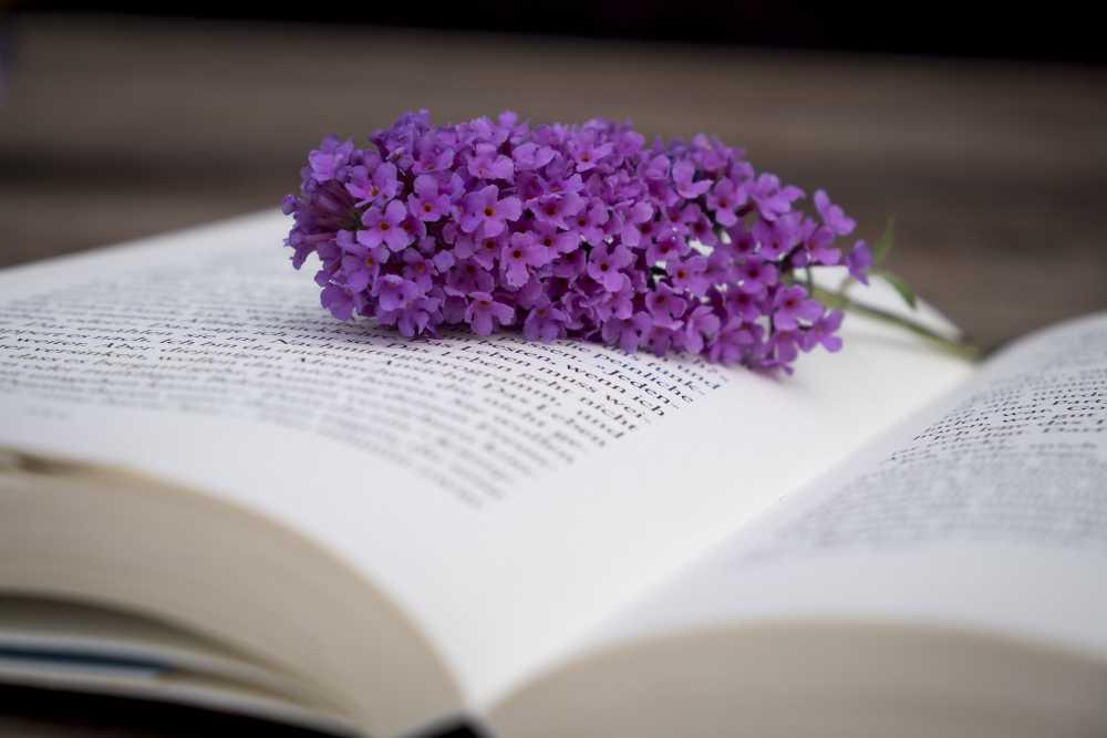 Buch mit Blume, pixabay_WerbeFabrik